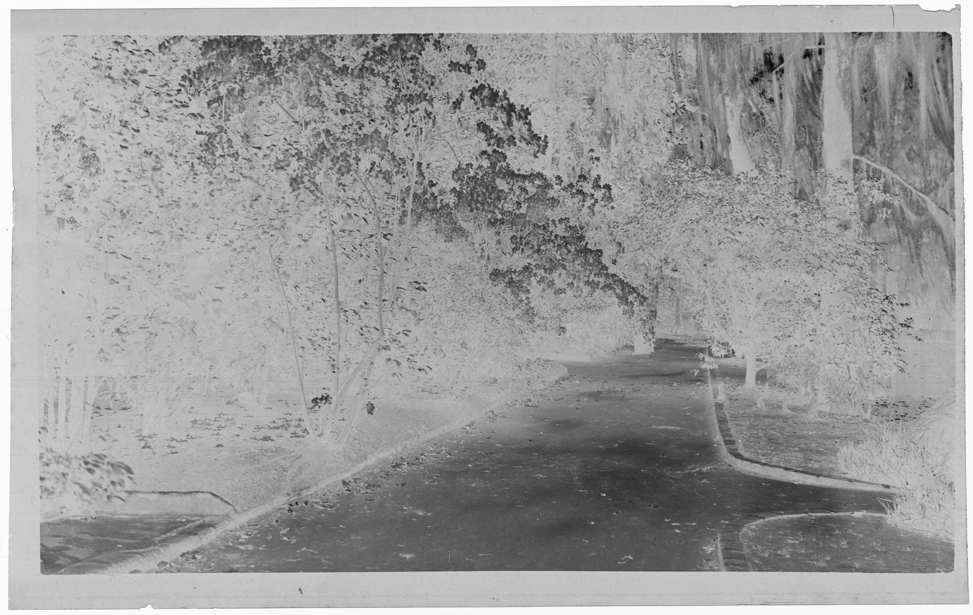 Negative of Magnolia Plantation Walkway