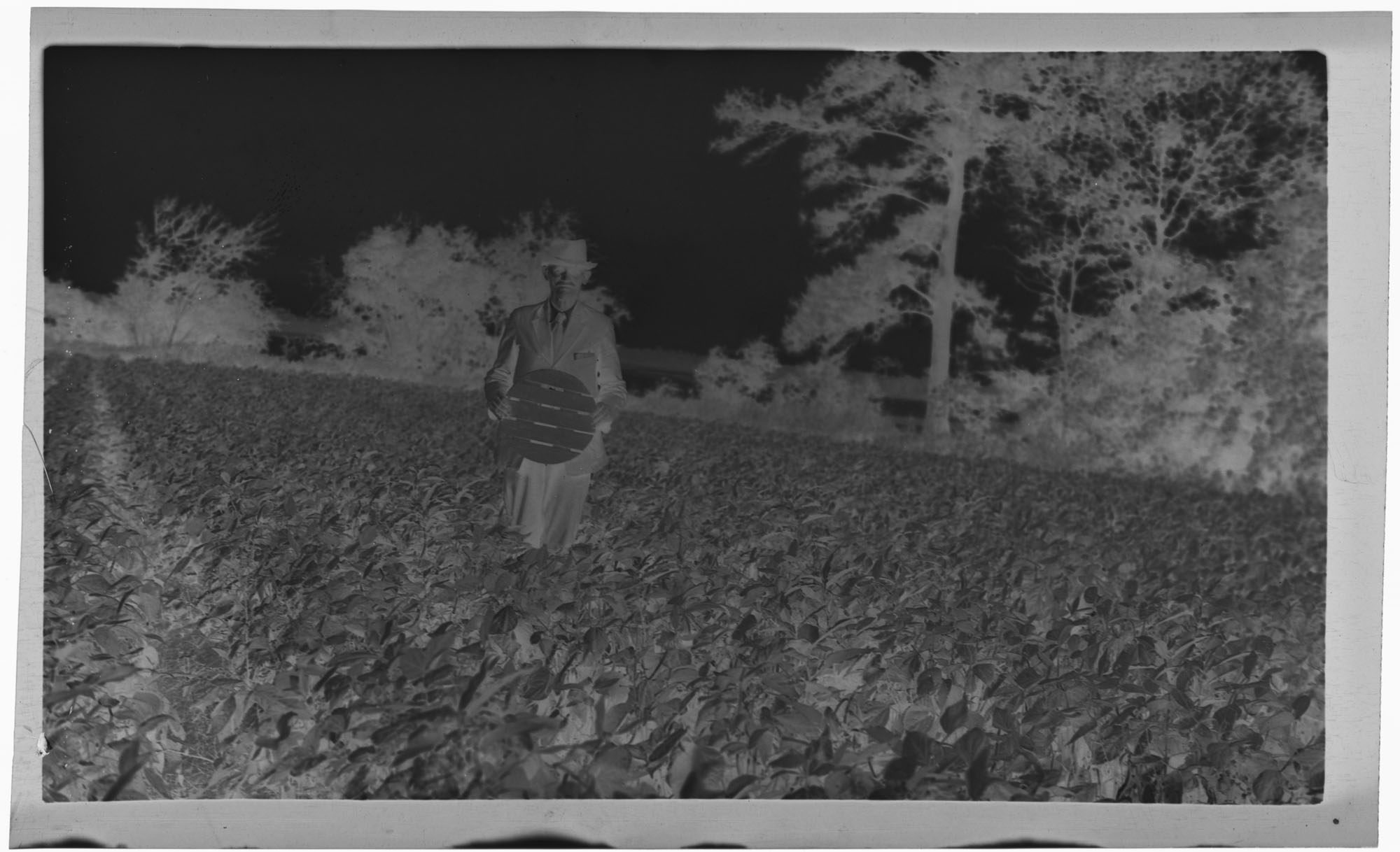 Negative of J.C. Seabrook with Snap Beans