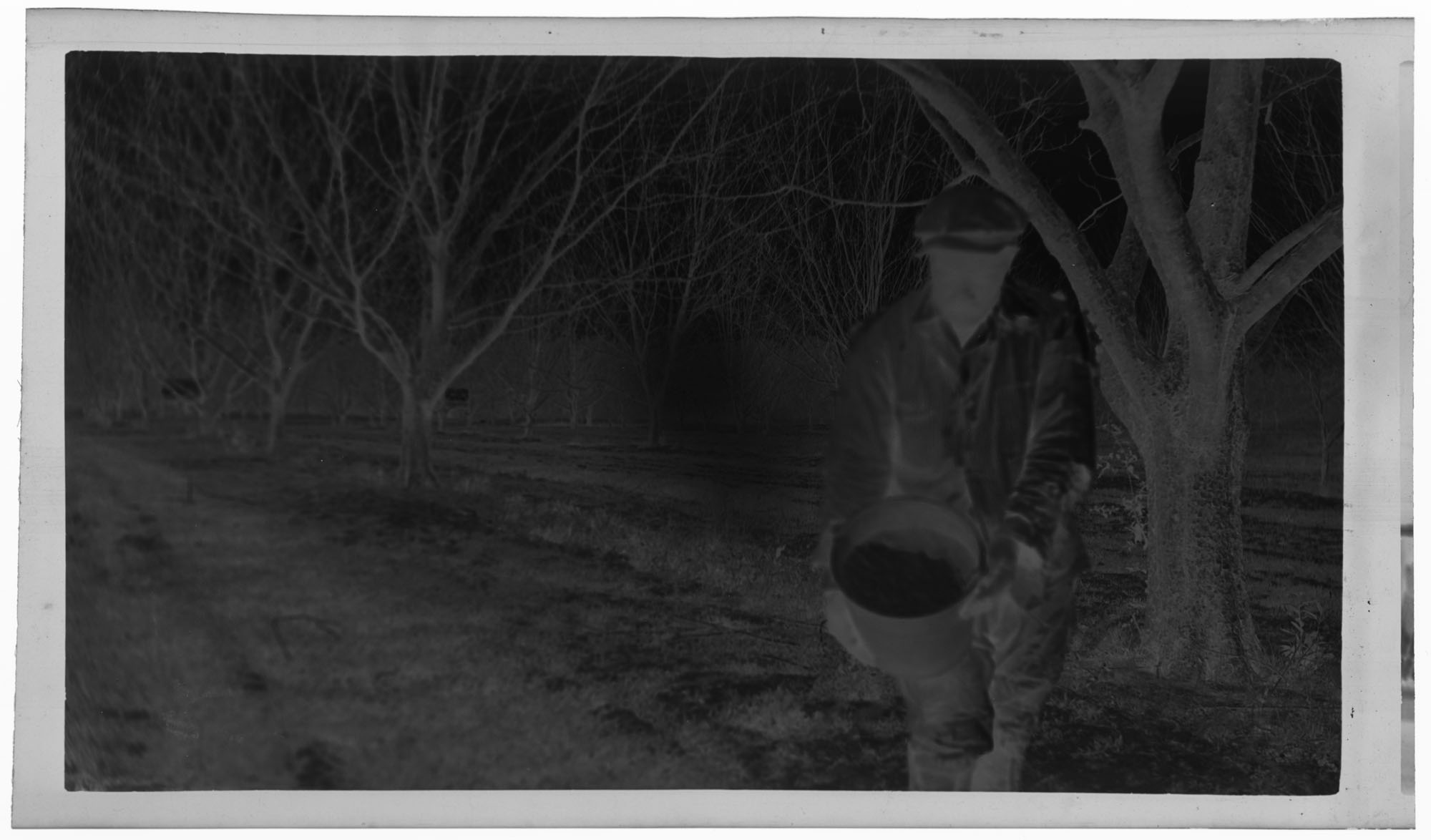Negative of Man Fertilizing Pecans