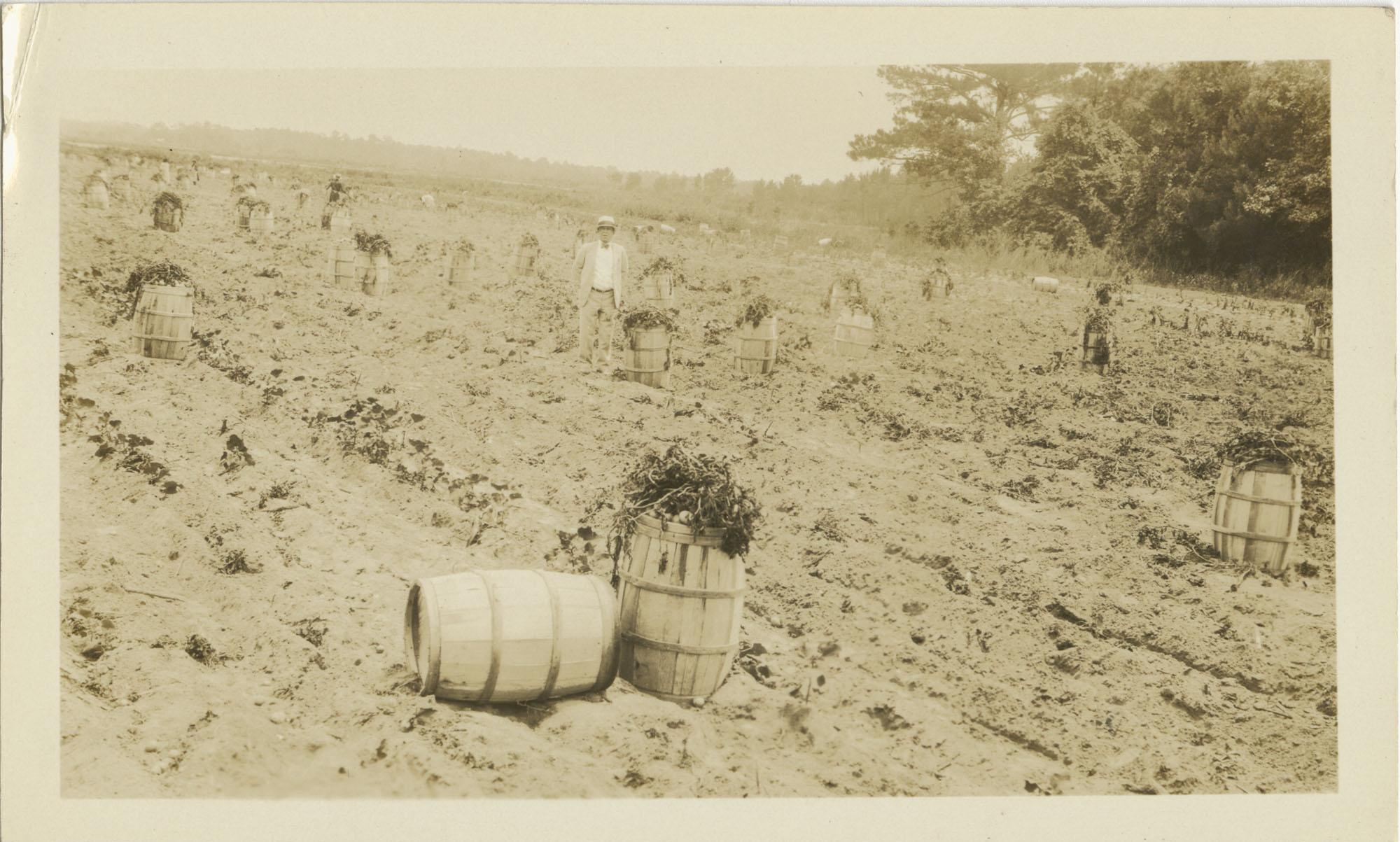 Businessman Standing in Potato Field