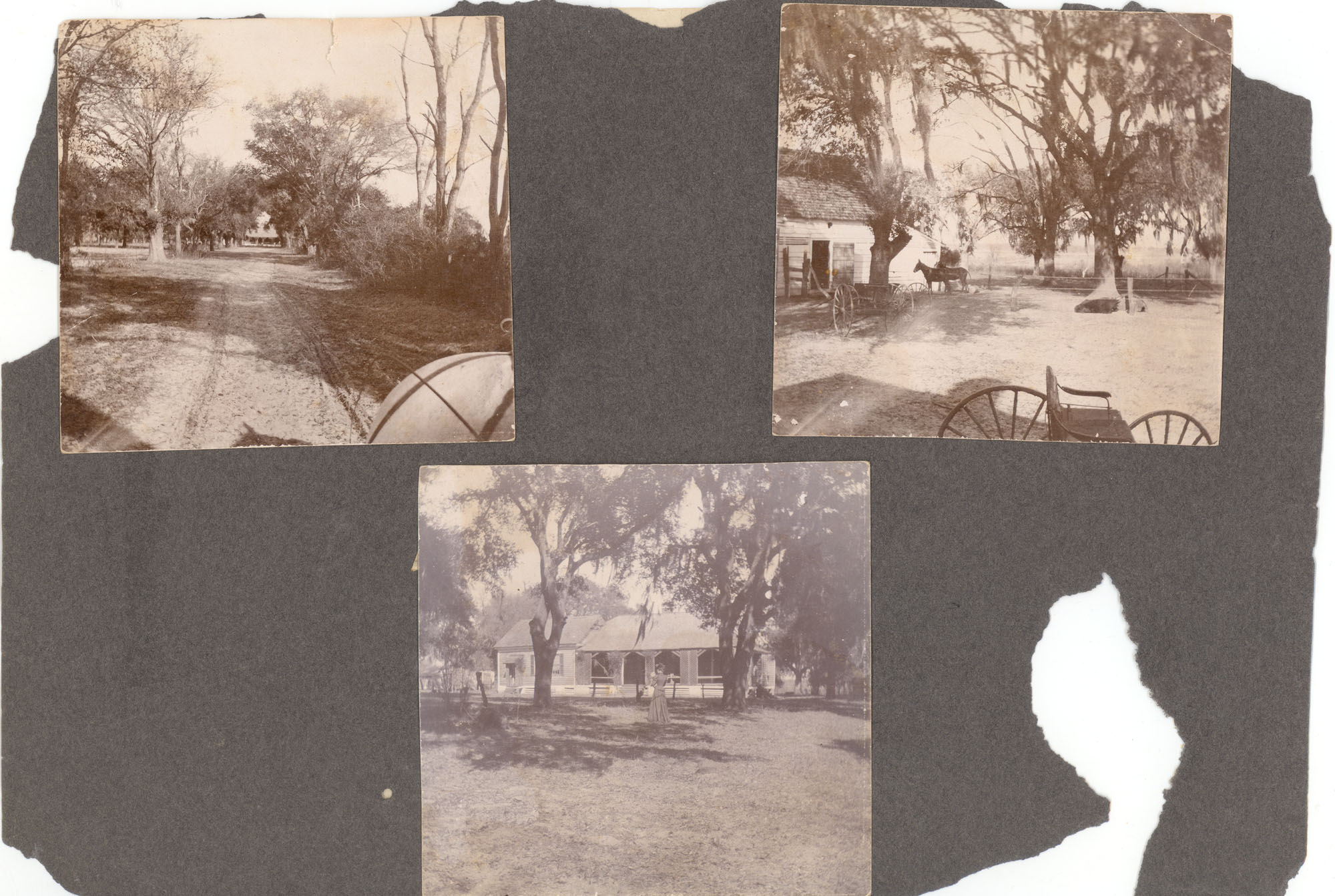 Charleston, Georgetown, and Flat Rock, Page 1 (back): Unidentified Georgetown Plantation
