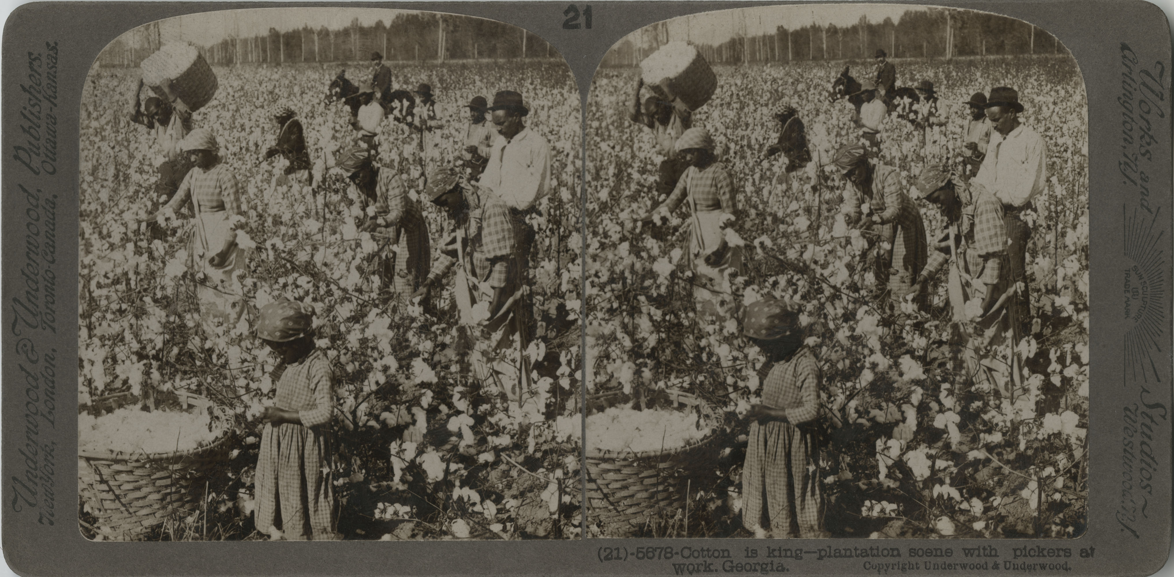 Cotton is king: Plantation Scene with Pickers at Work, Georgia
