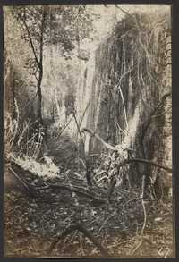 Santee-Cooper Cemetery Investigation 010