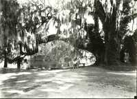 Plantations, Middleton Place