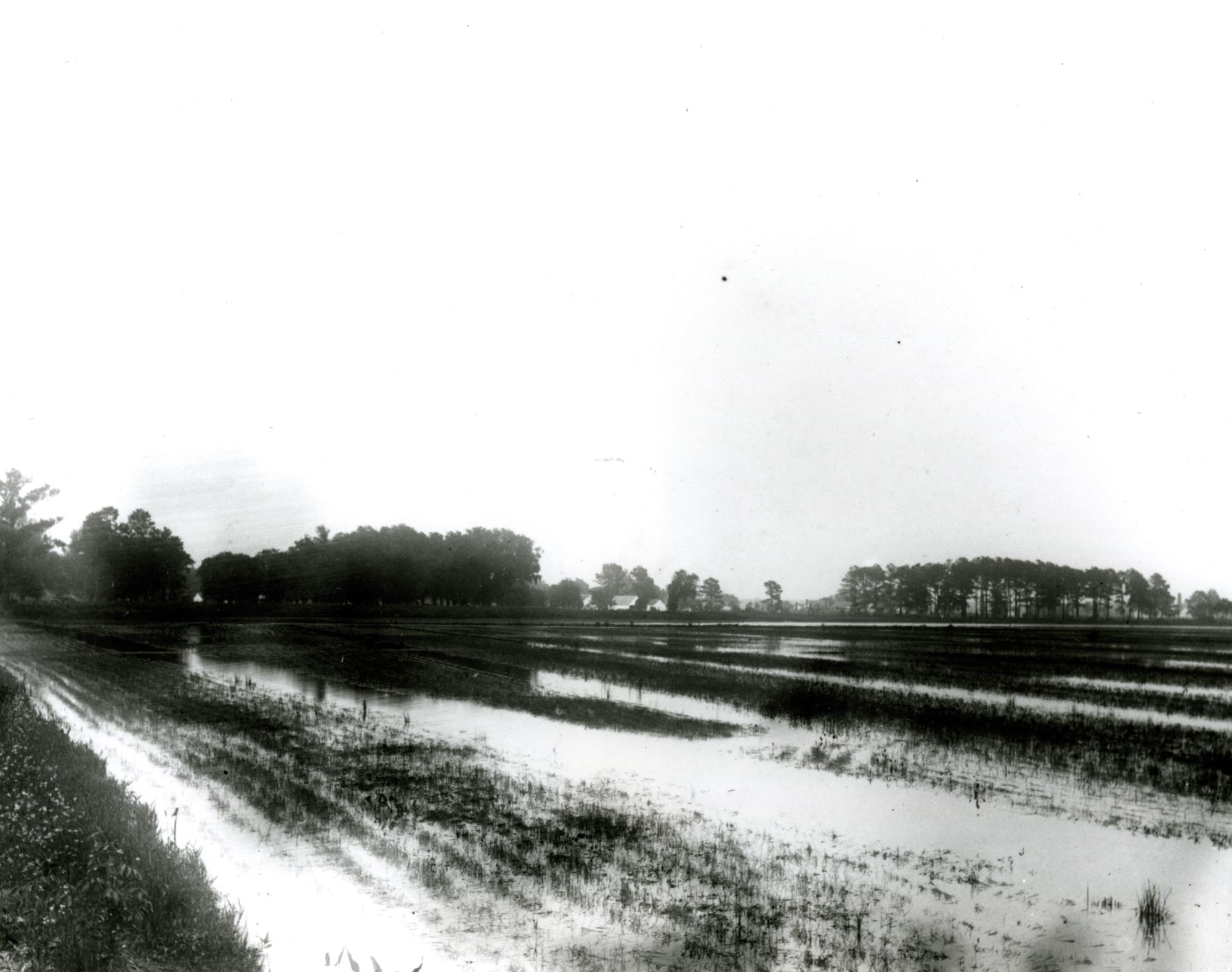 Plantations, Creighton Hill Plantation
