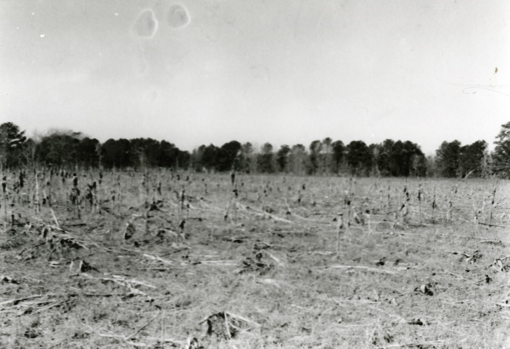 Plantations, Richmond Plantation