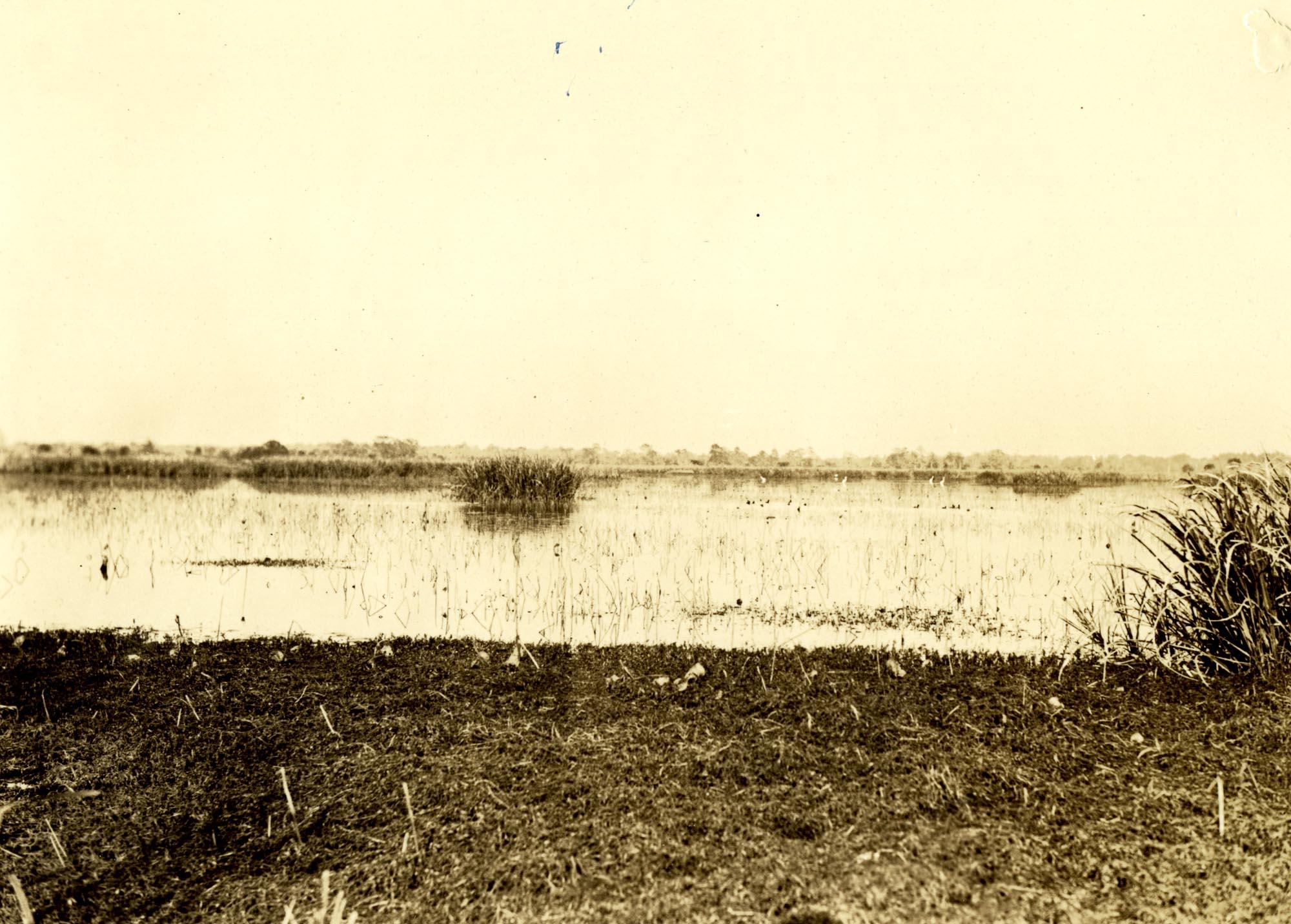Plantations, Nieuport Plantation