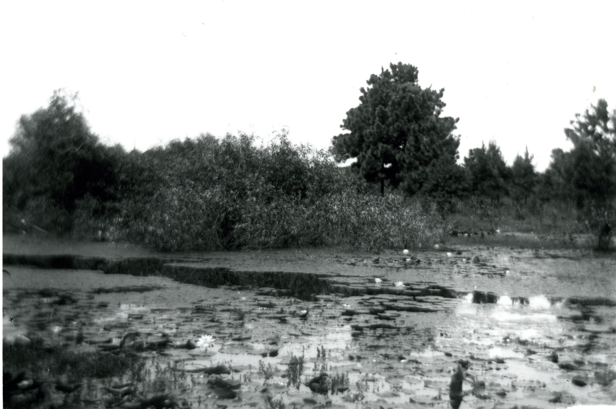 Plantations, Comingtee