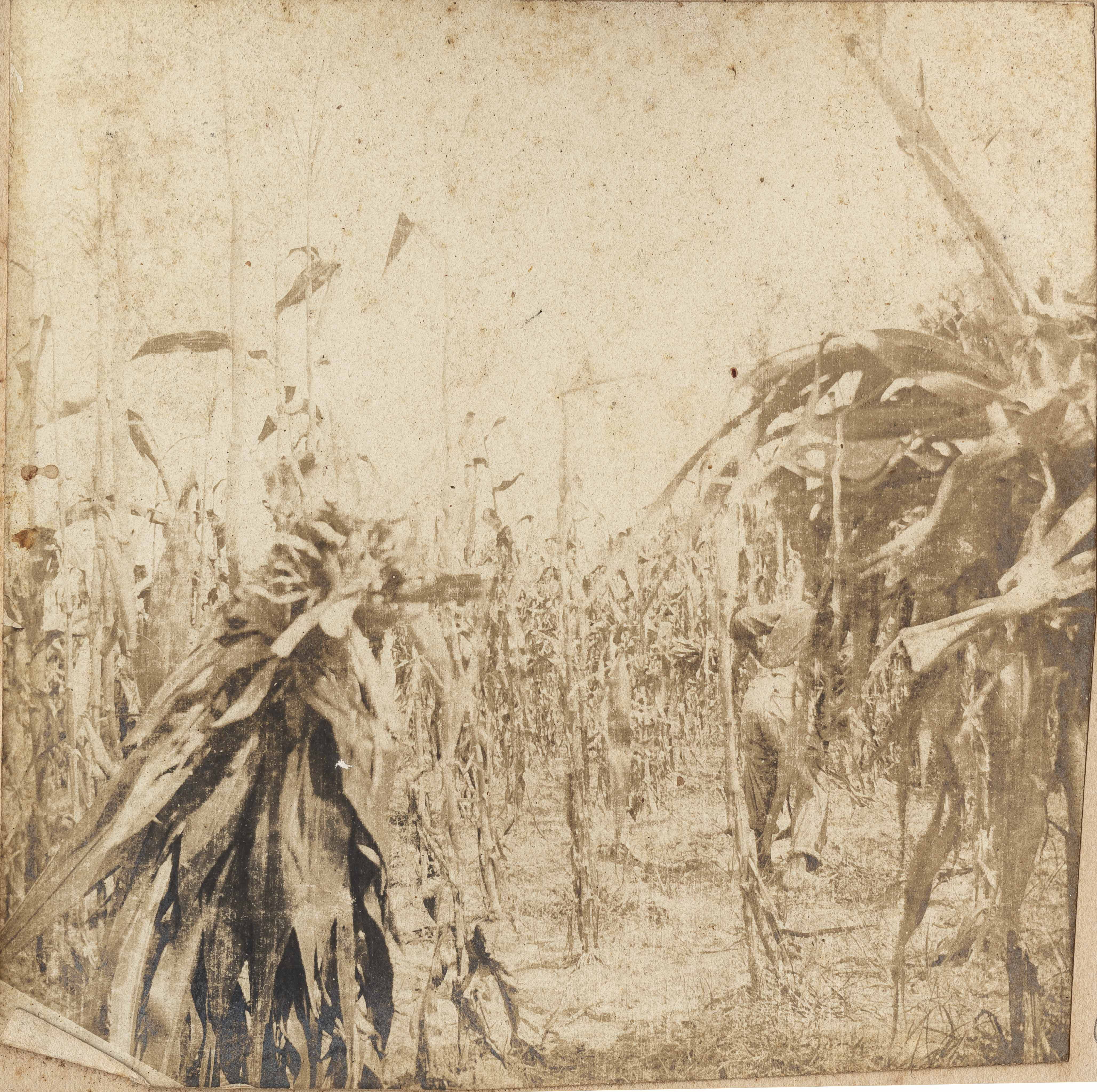 Workers with bundles of corn