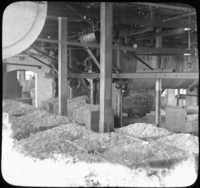 Cut Rags After Washing, Paper Mills, Holyoke, Mass.