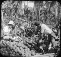 Husking Cocoanuts-Pagsanjan-Island of Luzon, P.I.