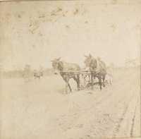 Mules working in field