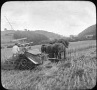 Harvesting Wheat in England.