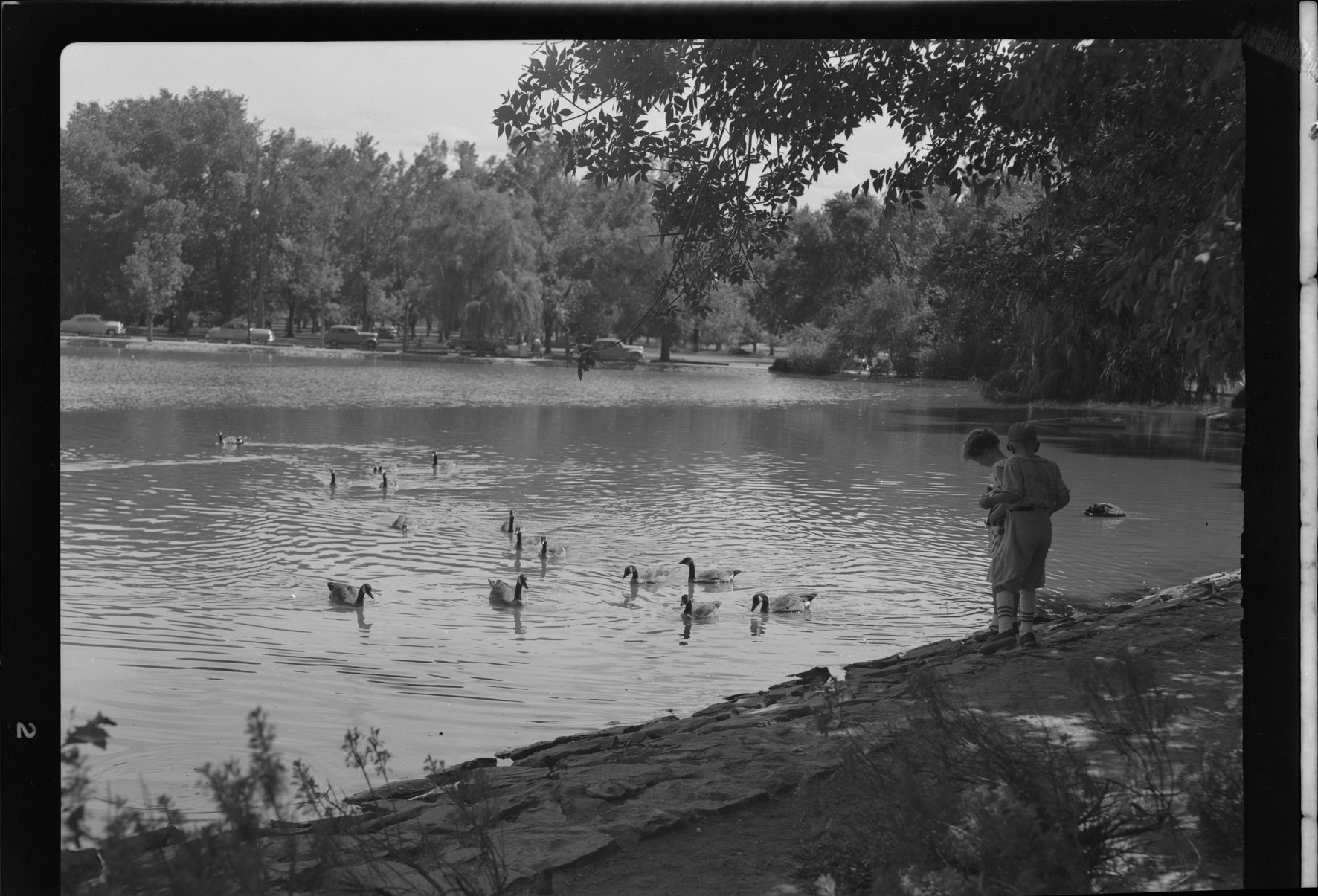 Boys feeding geese at City Park lake