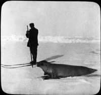 Commander Gerlache, Belgica Expedition (1897-99) Hunting Seals.