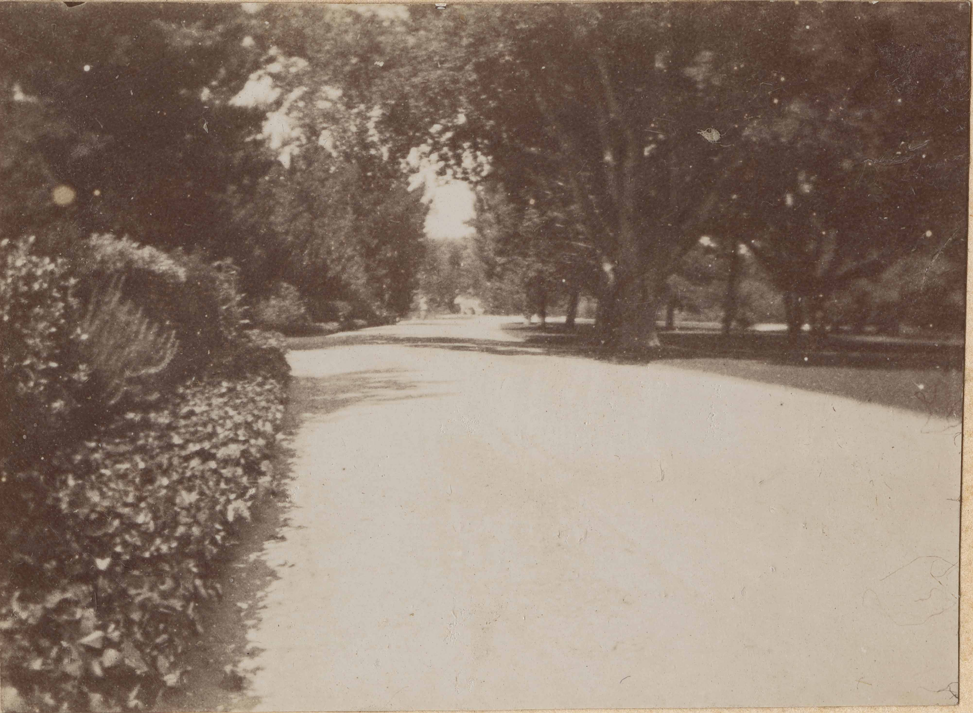 Road bordered by trees and shrubs