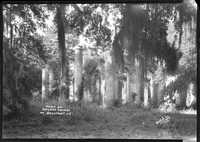 Ruins of Sheldon Church nr. Beaufort, S.C.