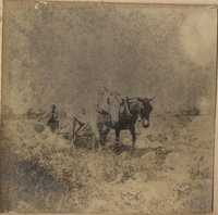 Man plowing with mules