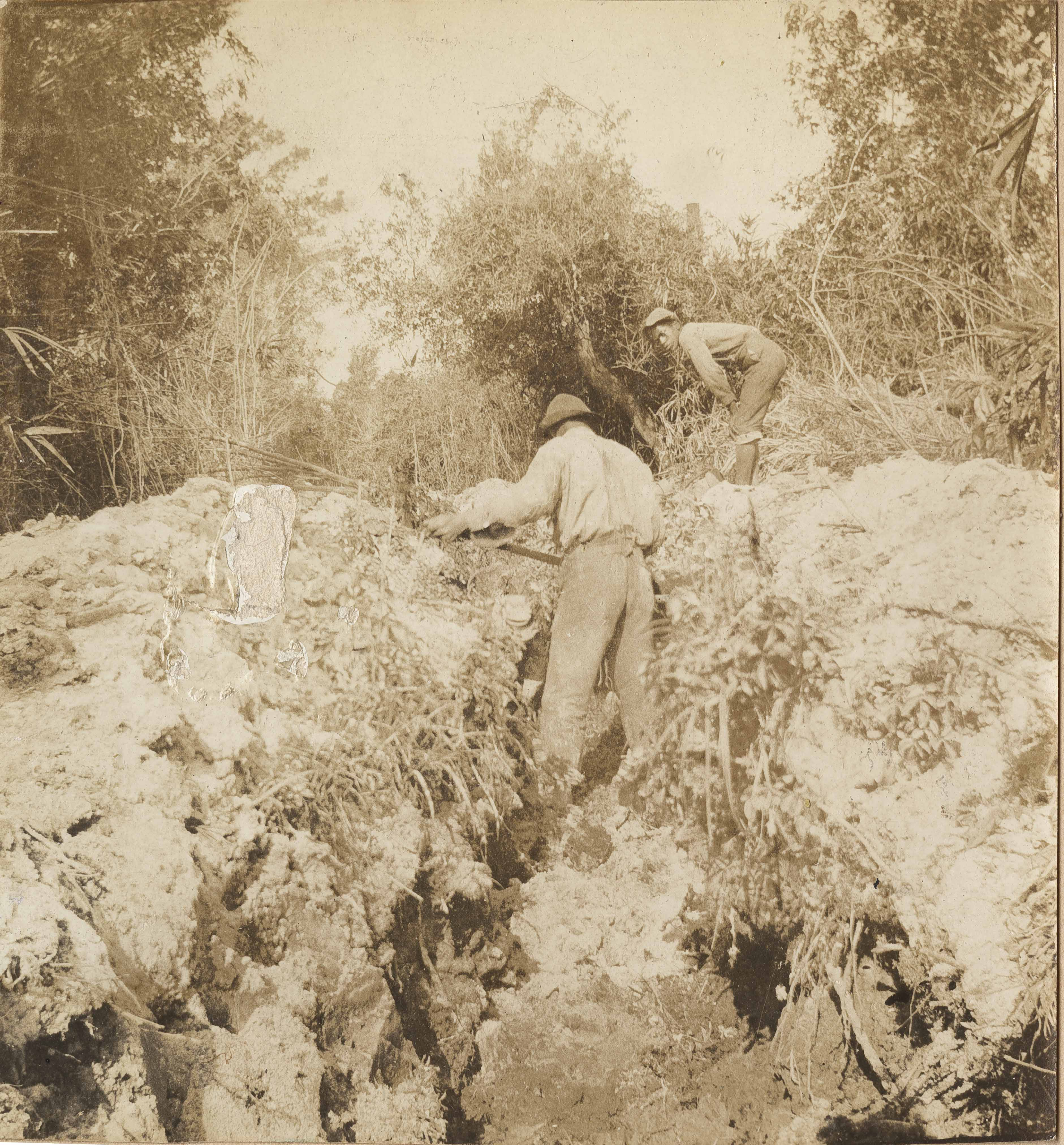 Men clearing trench of brush