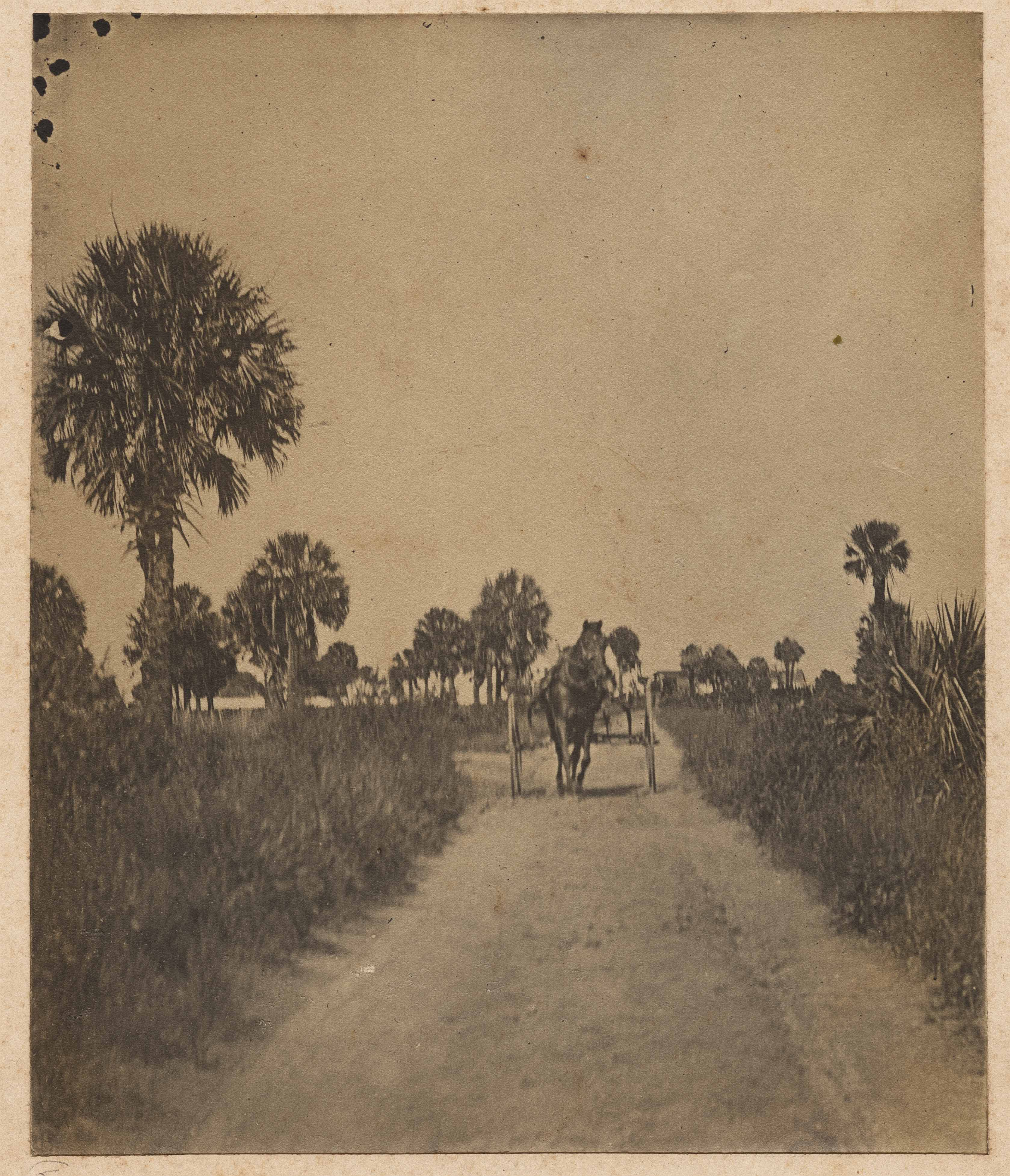 Horse and buggy.