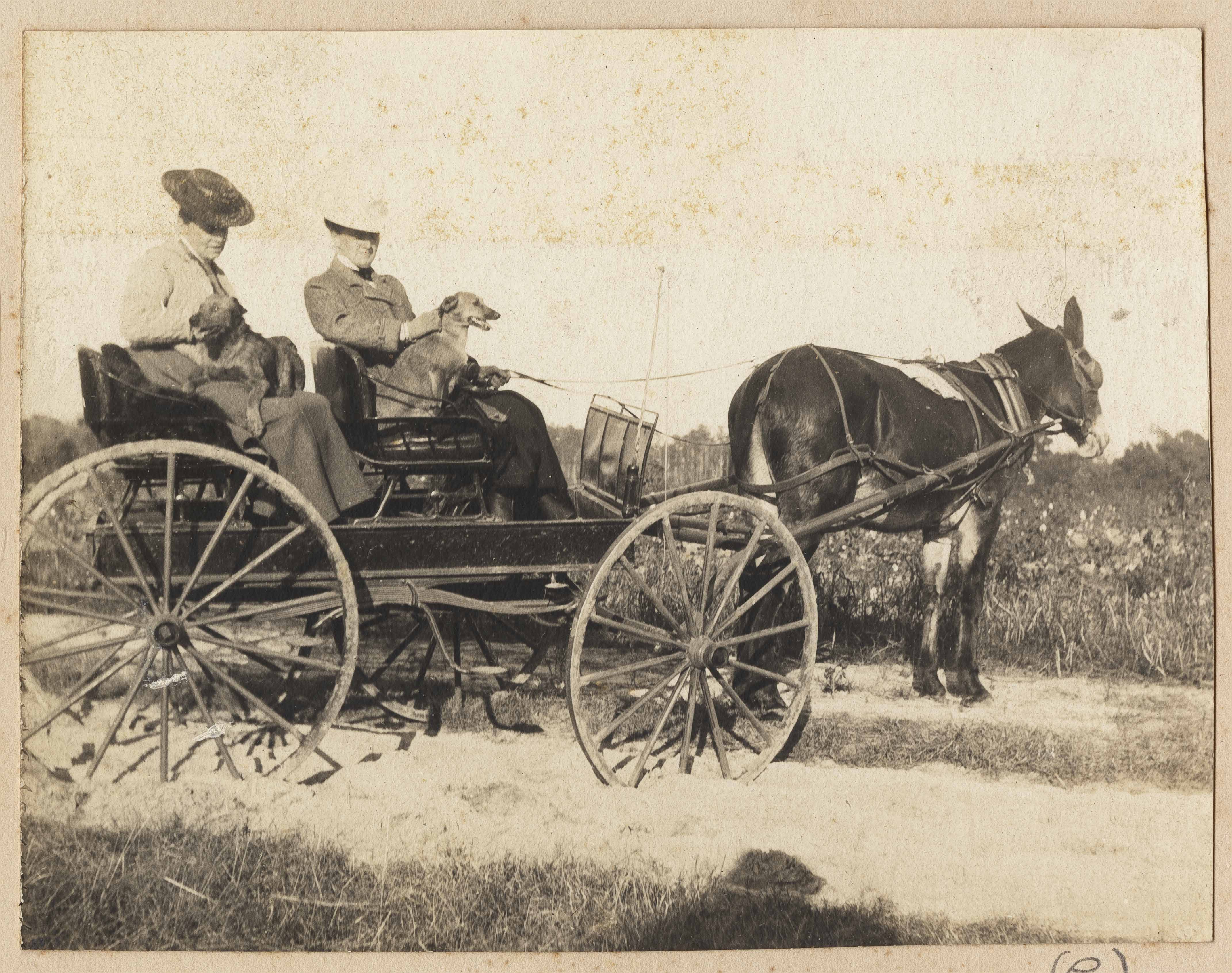 Two women and two dogs in a wagon
