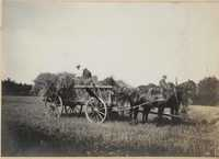 Loaded hay wagon in Altona