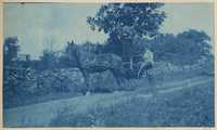 Woman in horse trap near stone fence