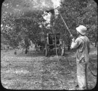 Summer Spraying of Apple Orchard, Hilton, N.Y.