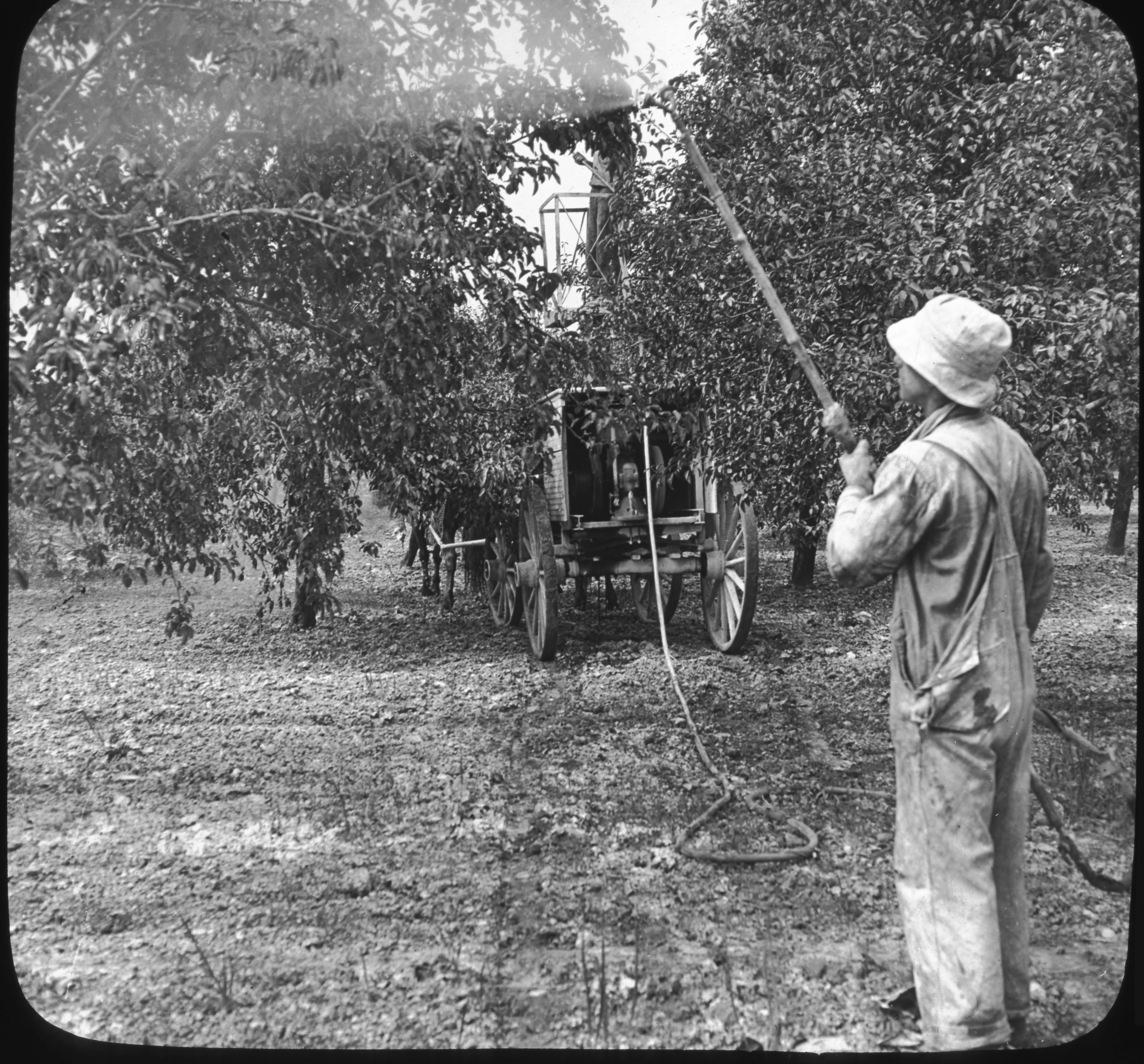 Summer Spraying of Apple Orchard, Hilton, N.Y.