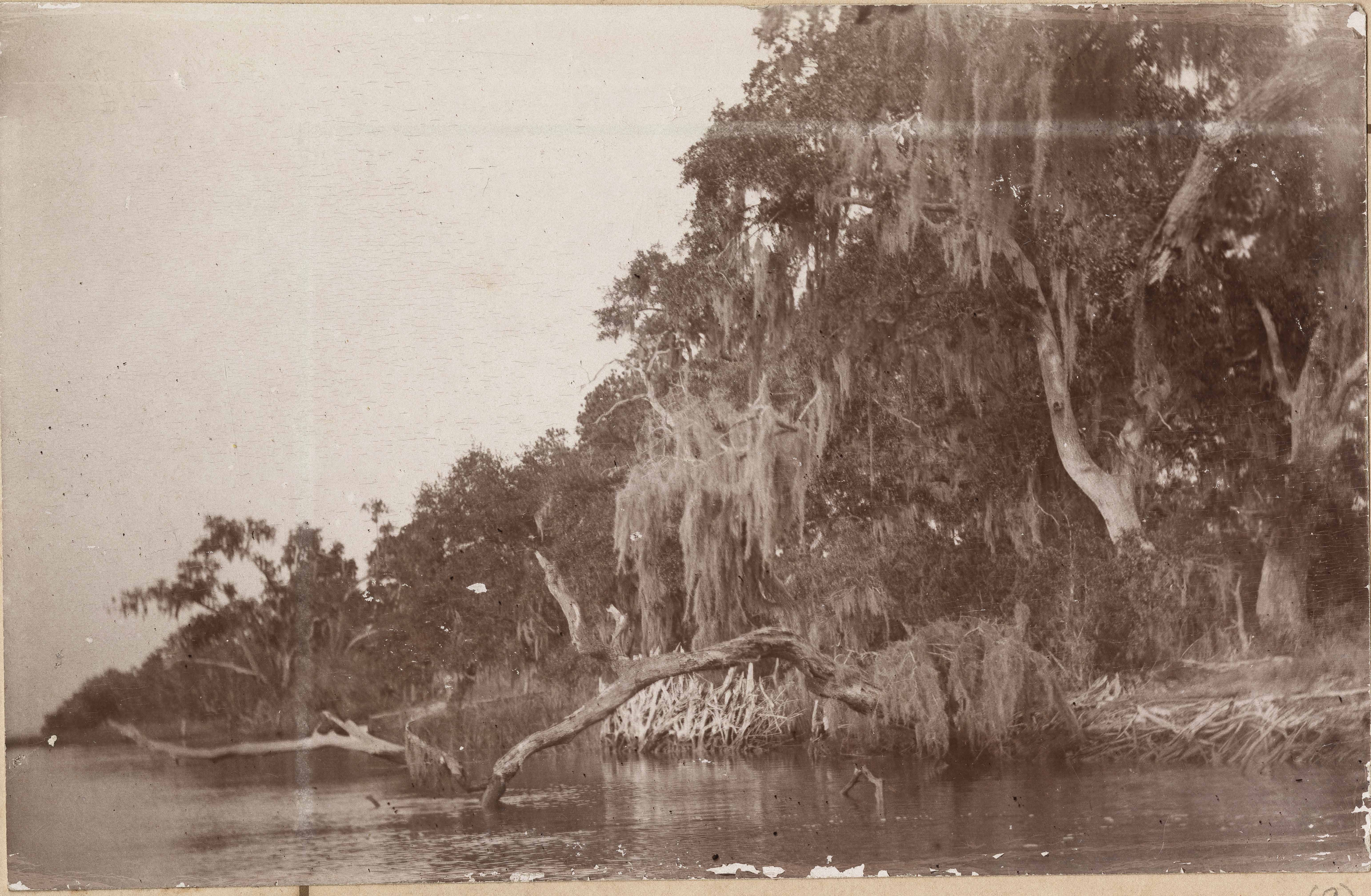 Scenic view of riverbank along Halls Island