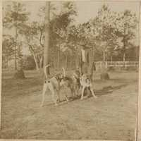 Man with three hunting dogs
