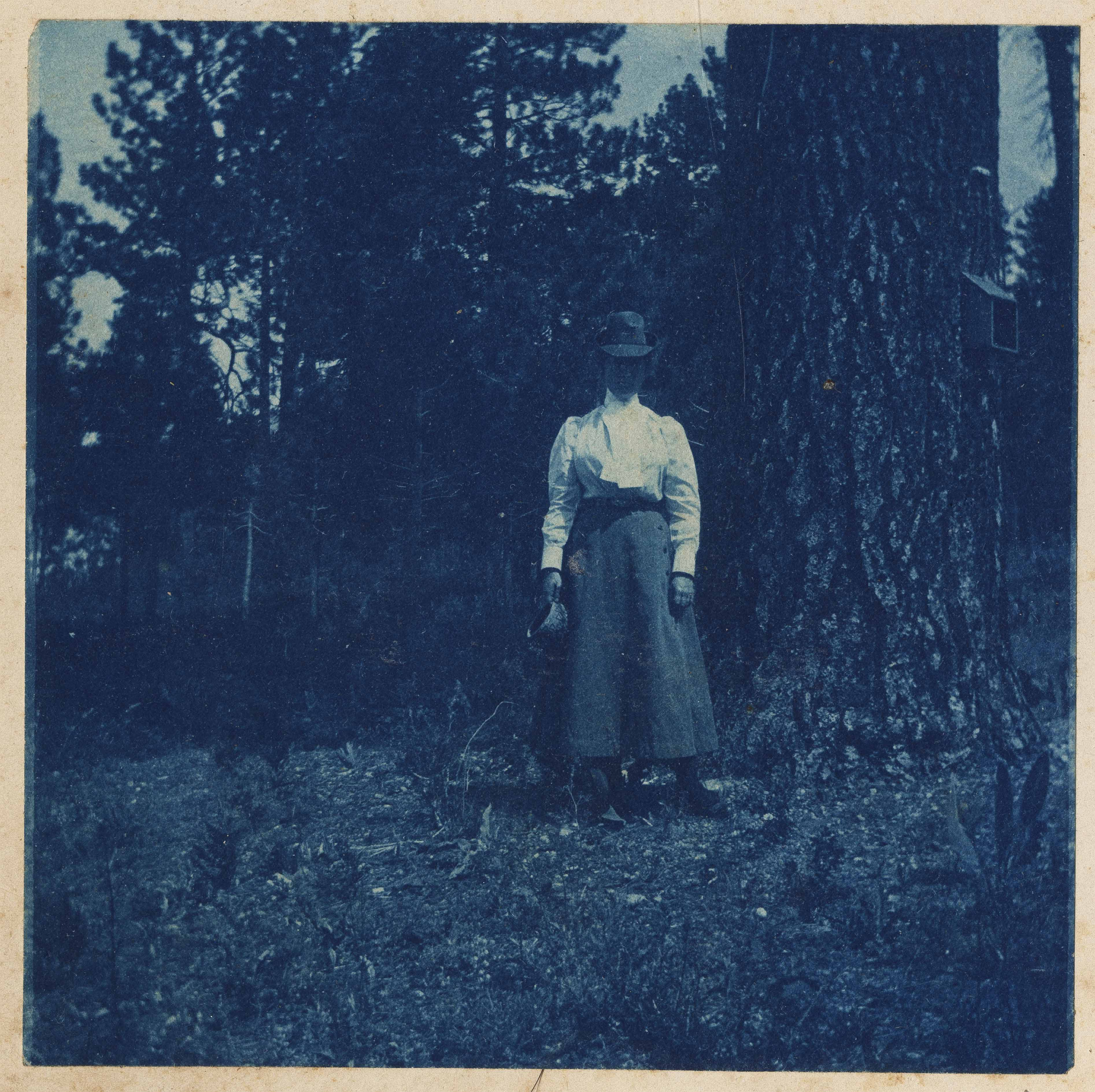 Victorian era woman to right of large pine tree