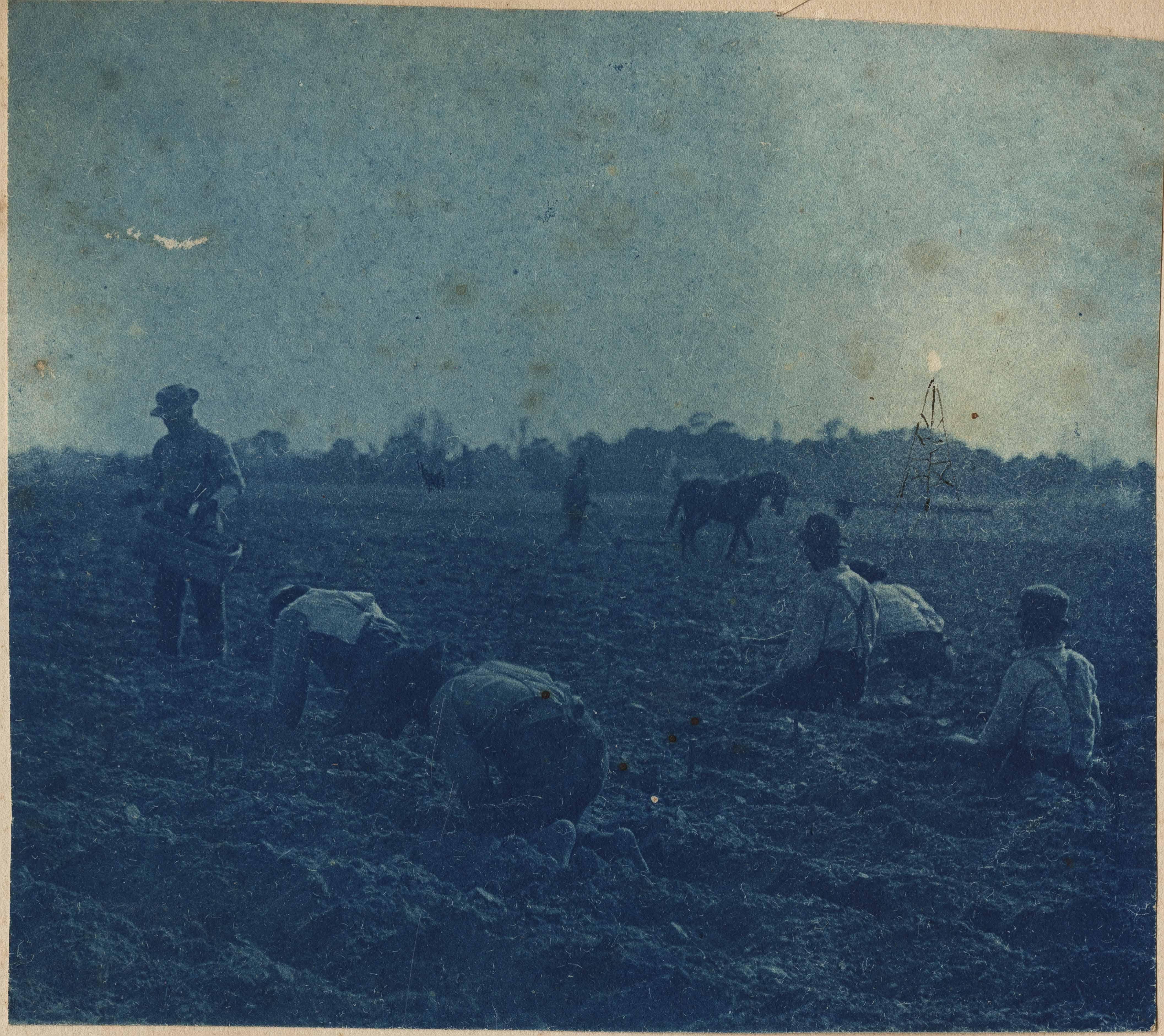 Workers preparing asparagus fields