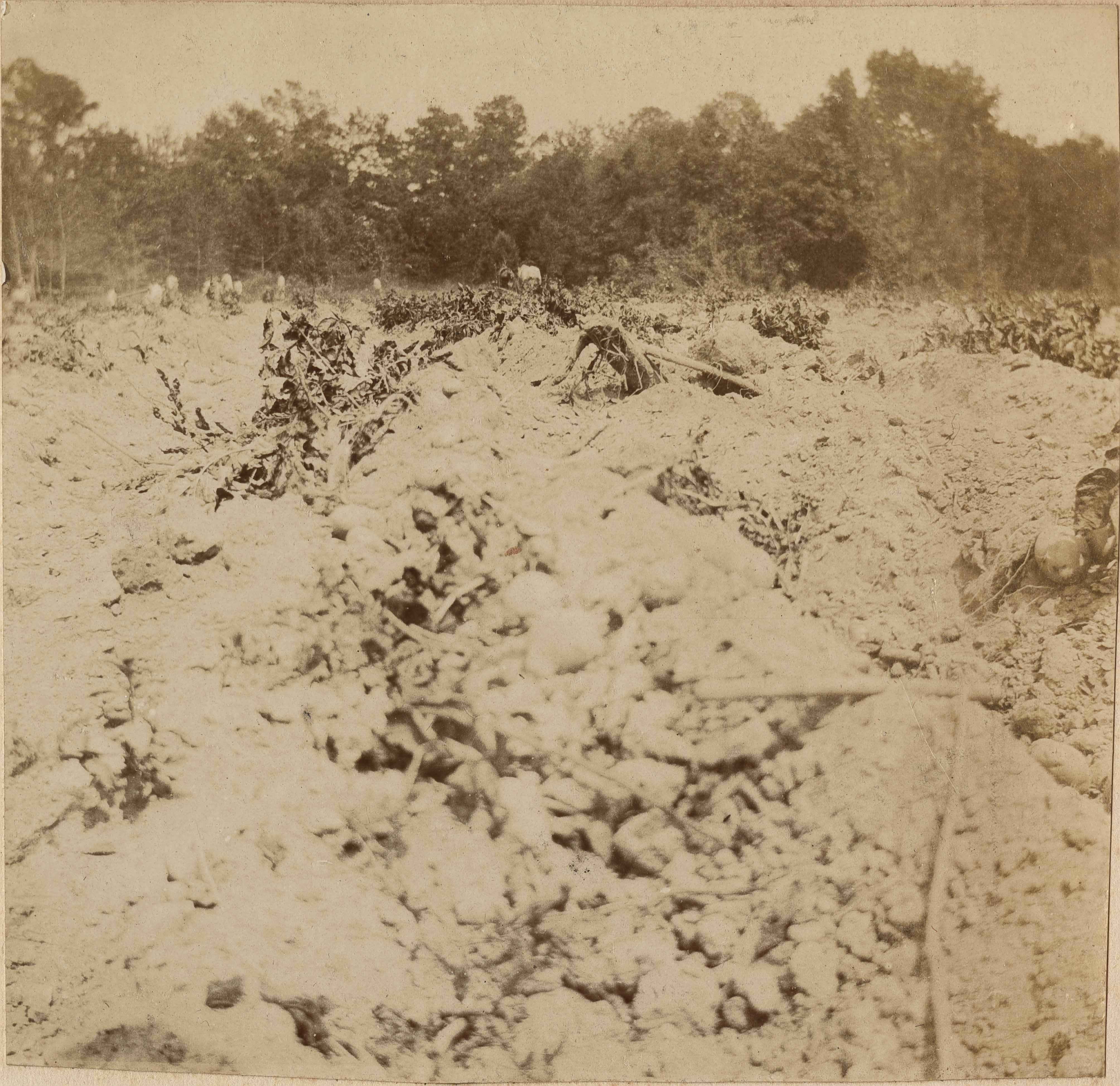 Results of potato harvesting