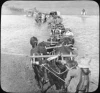 Transports Crossing the Vaal River at Viljoen's Drift, S. Africa.