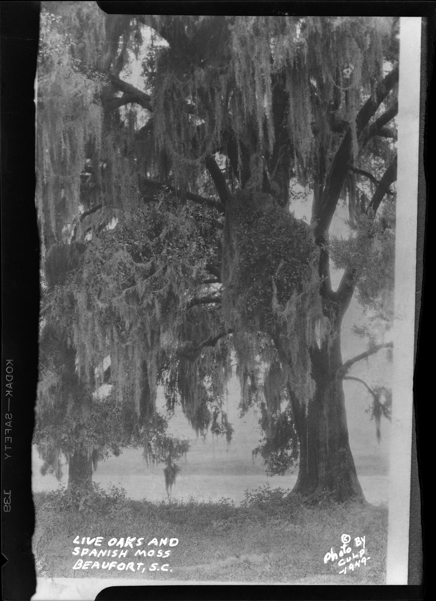Live Oaks and Spanish Moss Beaufort, S.C.