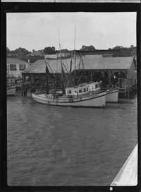 Shrimp boats,