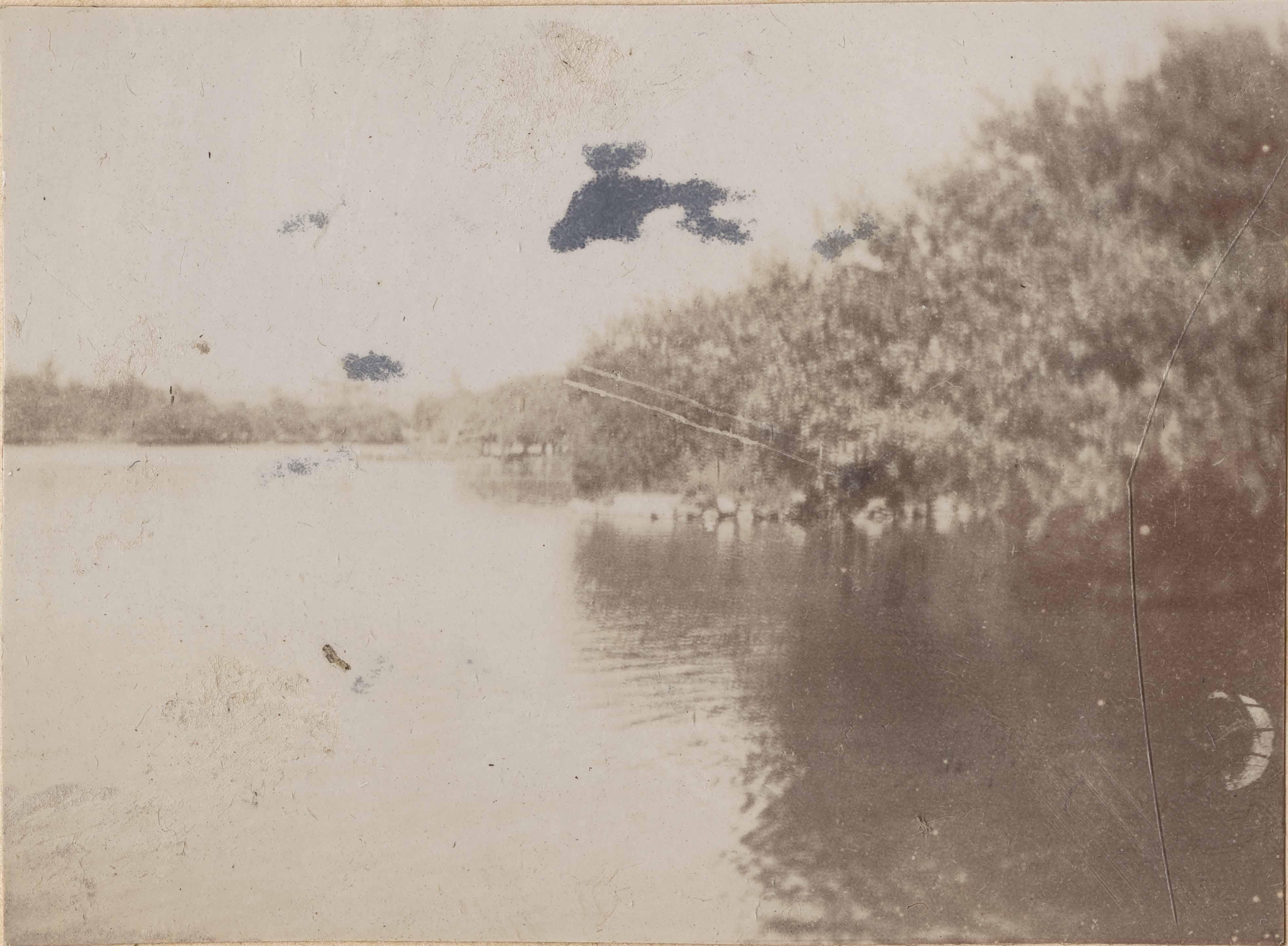 Woodland near body of water