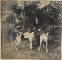 Three hunting dogs and handler