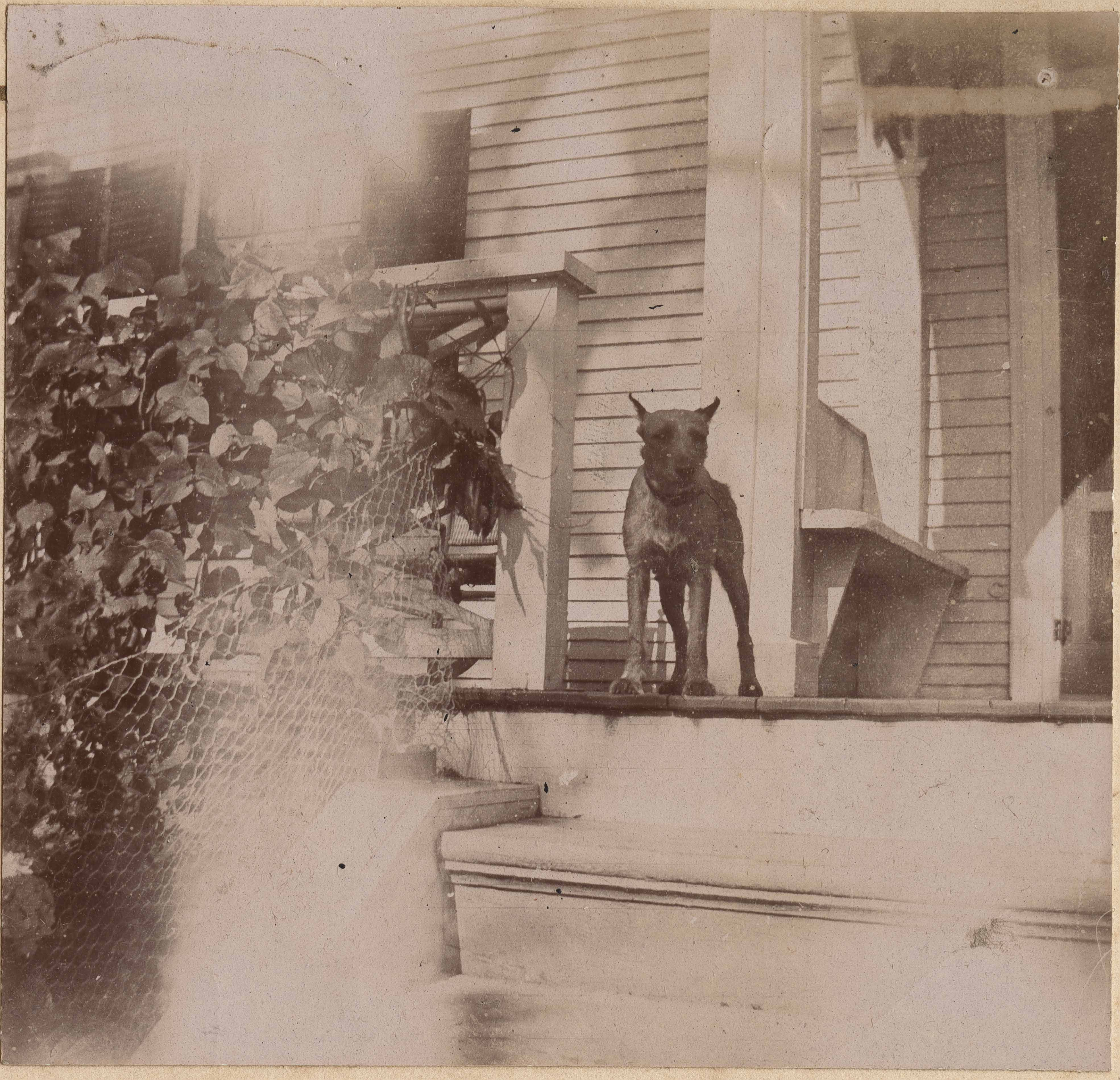 Dog standing on porch near bench