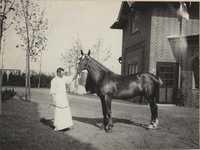 Horse and hostler in Altona