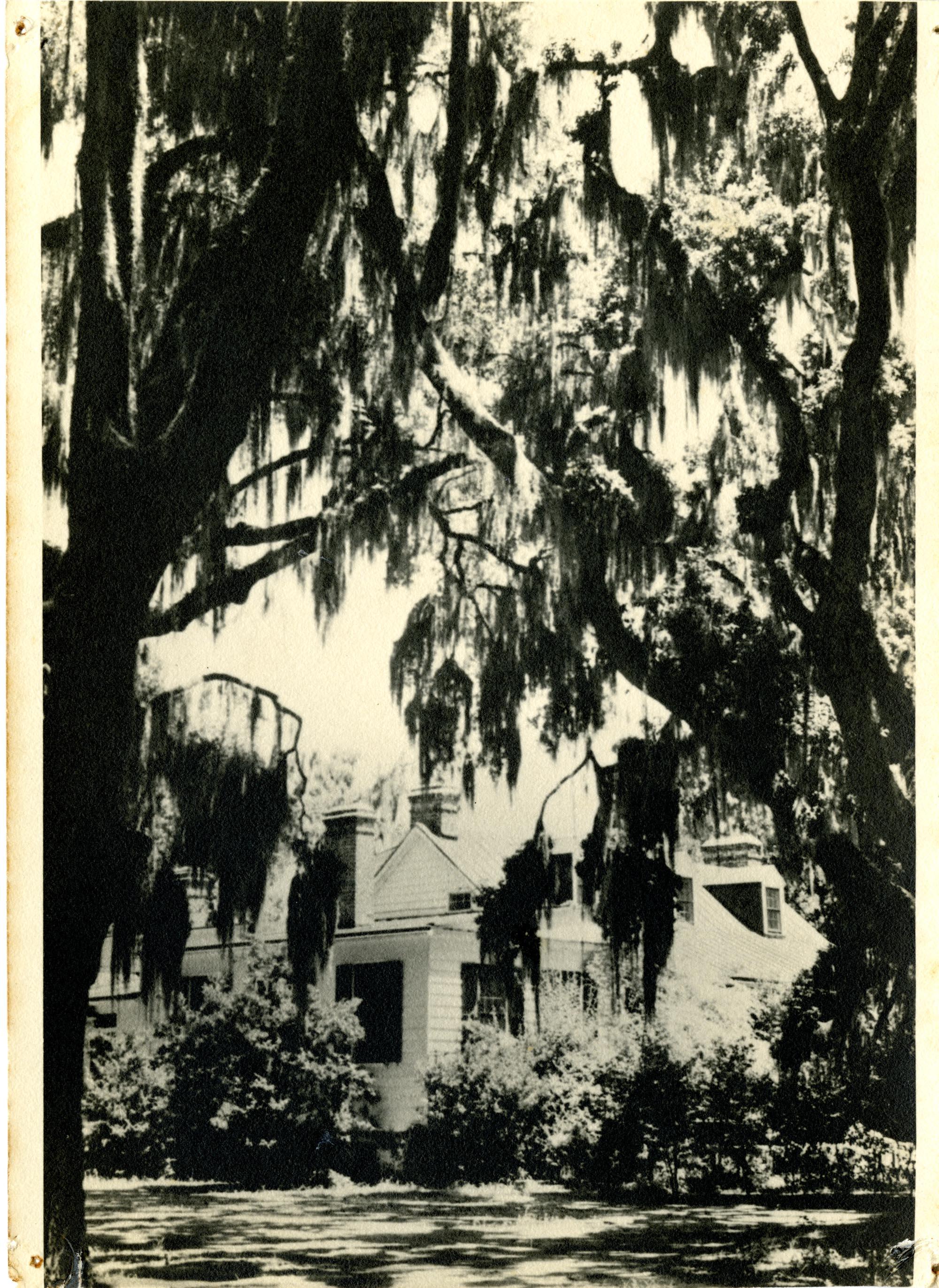 Plantations, The Bluff