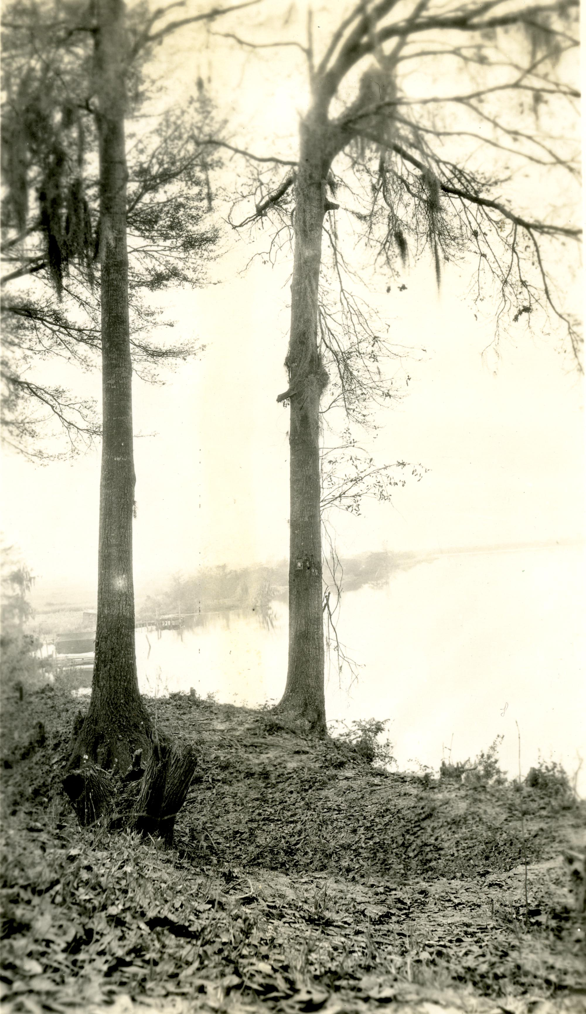 Plantations, The Grove