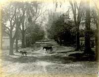 Plantations, Eutaw