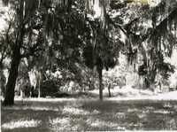 Plantations, White Hall Plantation