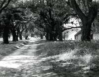 Plantations, McLeod Plantation