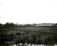 Plantations, Creighton Hill Plantation