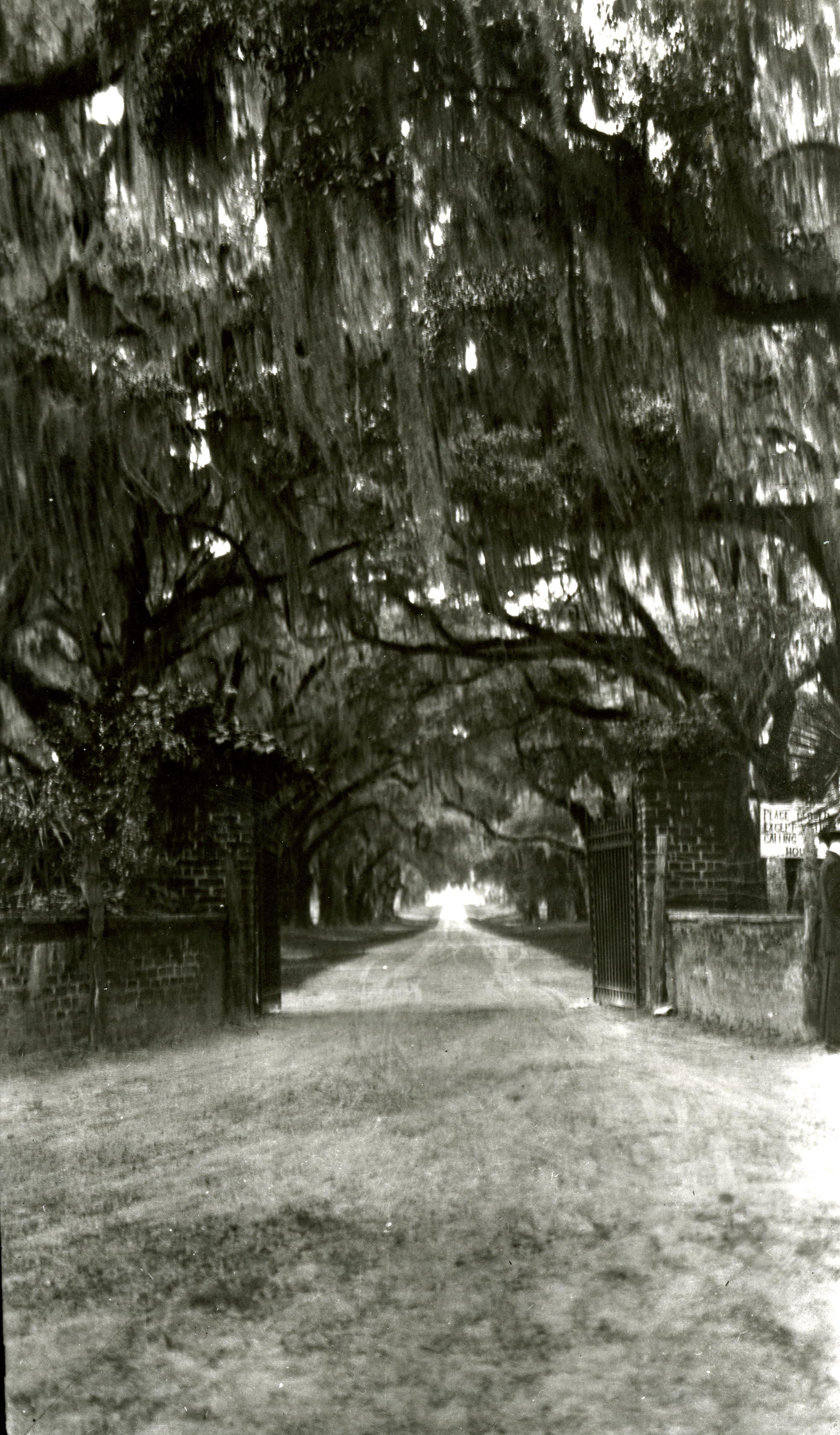 Plantations, The Oaks