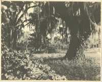 Plantations, Runnymede Plantation