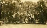 Plantations, Runnymede Plantation